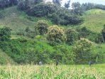 bukit berbunga jojoban